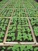 Coir Peat Seed Starter Formula