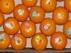 Mandarin Kinnow