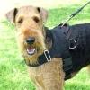 All Weather Nylon Dog Harness
