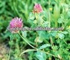 China BNP Supply Best Natural Red Clover Extract with High Quality