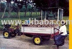 Raw Cassava Tuber