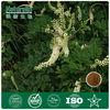 2013 Hot Sale Black Cohosh Extract 2.5% triterpene glycosides