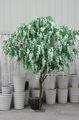 nuovo design glicine artificiale albero