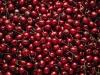 High Quality Fresh Cherry