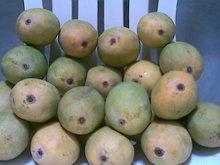 AT-Mangoes And Fresh Fruits.