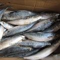Mais baratos e melhores 400-600g venda de peixe