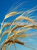 Organic Activated Barley