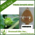 100% esteróide natural pó/extrato de tribulus terrestris