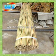 Bamboo for support olive tree growing
