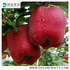 Chinese fresh delicious factory out let authorized grade A new crops fresh huaniu apple