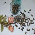 Chino negro primas semillas 8cm, la nueva cosecha