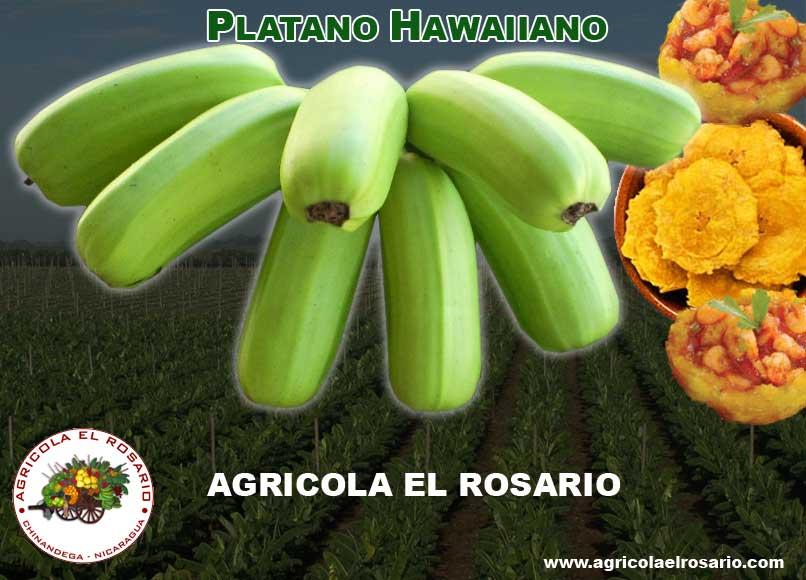 Hawaiian Plantain