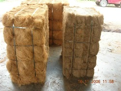 Palm Fibre
