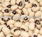 FREJOL CASTILLA Bean