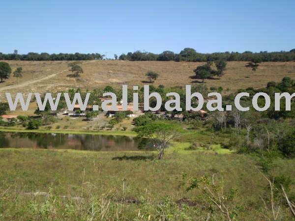 الأراضي الزراعية للبيع في البرازيل