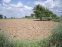 small farm sell in jalore, pali, sirohi, jodhpur, udhaipur dist land