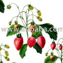 Strawberrys fabrics