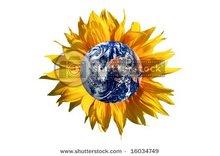 Refined sunflower oil in bottles-1, 2, 3, 5, 10 l, also in tanks