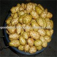 Nuni Fruit Powder, certified organic wild harvest noni fruit