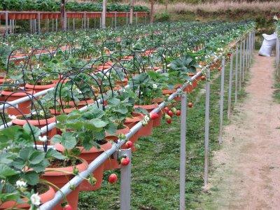 Tips Membuat Kebun Sayuran Di Pekarangan rumah