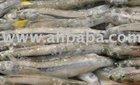 Silver Smelt whole (Odonthestes regia)