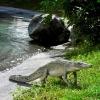 resin crocodile 4ft