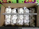 2012 hot white garlic for sale