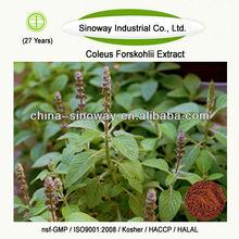 coleus forskohlii plant extract