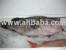 Frozen Fish from Europe & South America