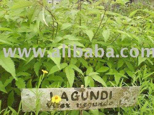 Dried Lagundi Leaves
