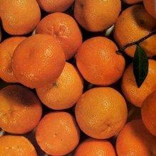fresh kinoo fruit
