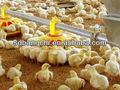 bc série automático de frango pan alimentador