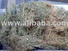ARENARIA herb