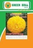 marigold seeds hat giong hoa cuc van tho