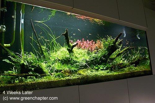 Planted Aquarium #3 - Buy Nature Planted Aquarium Product on Alibaba ...