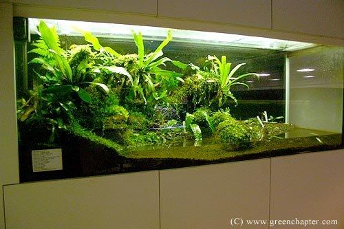 416 best Vivarium images on Pinterest | Vivarium, Aquascaping and Geckos - 416 Best Vivarium Images On Pinterest Vivarium, Aquascaping And