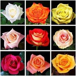 Bunga segar dari Cameron Highlands flower