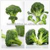 Fulvic Acid Type III Foliar NPK Fertilizer with Micro Elements for Plants