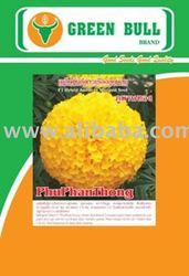 hat giong hoa cuc van tho phuphanthong F1 marigold seed