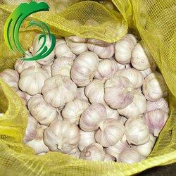crop 2013 market prices fresh natural garlic