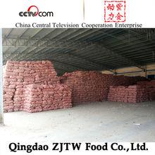 Super Quality Red Garlic Farm