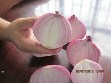 fresh red onion 2013