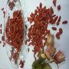 goji berry manufacturer