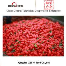 Ningxia Organic Goji Berry for Global Market