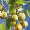 Good quality Garcinia cambogia Extract