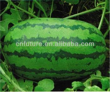 organic fertilizer for watermelon