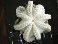 Octopus Flowered IQF - OCTOPUS VULGARIS