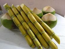 Sugarcane and Fresh Coconut