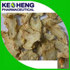 Chinese angelica powder/Angelica p.e. powder extract