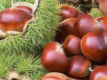 2013 New Fresh Yanshan Chestnut Chinese Chestnut Big Sale